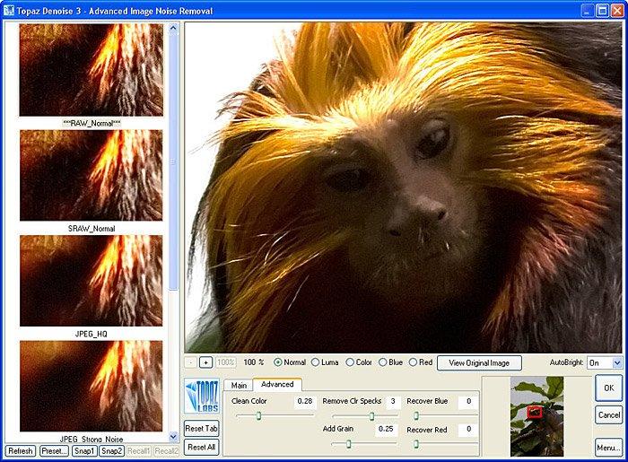 monkey2b