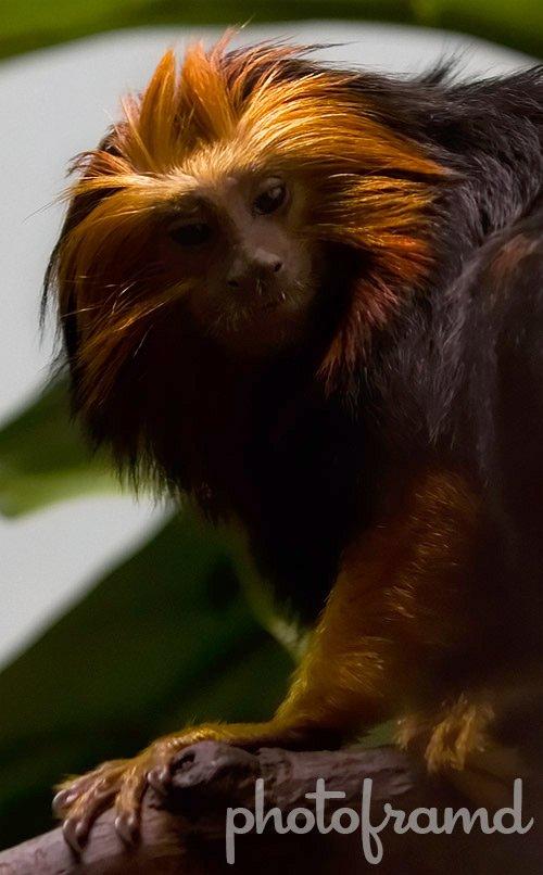 monkey3