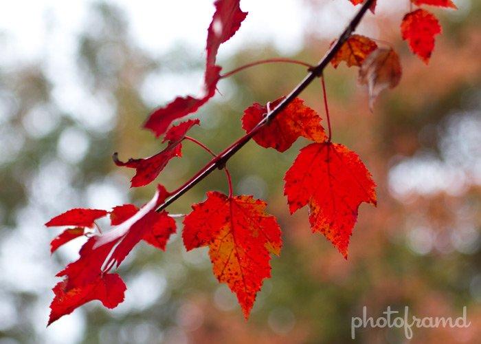 fall2010-li3