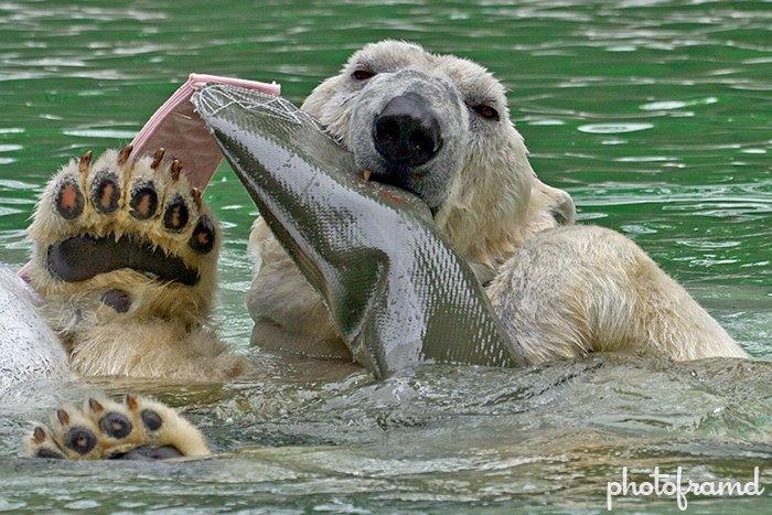 Bronx Zoo – Animal Photography and Sigma 50-500mm ... Bronx Zoo Animals